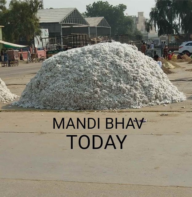 Mandi Bhav Today of Rajasthan & Haryana