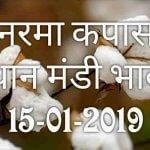 mandi-bhav-15-01-2019