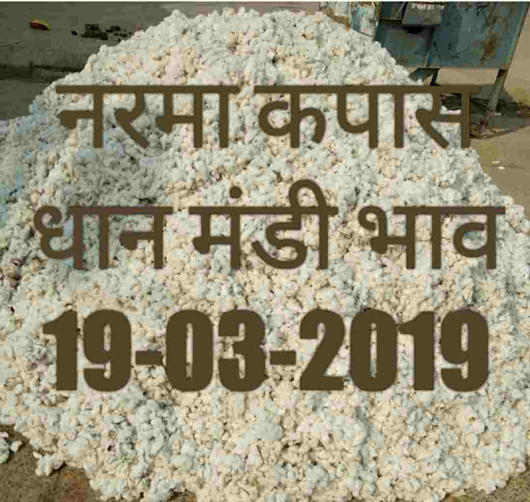 mandi-bhav-19-03-2019 , cotton prices