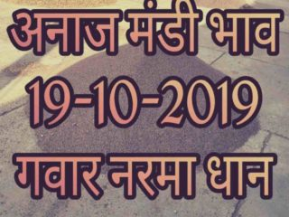 Mandi Bhav 19-10-2019 Narma Dhan Rates